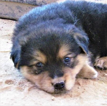 Adoption Event at Pet Club