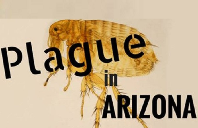 Health alert: Fleas test positive for plague in Navajo & Coconino counties
